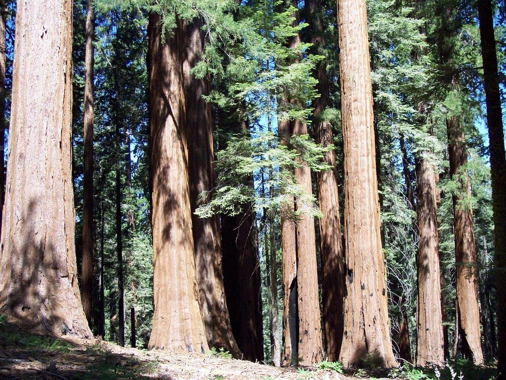 Giant_Forest.jpg